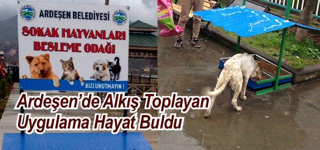 Ardeşen Belediyesi Sokak Hayvanları İçin Düğmeye Bastı
