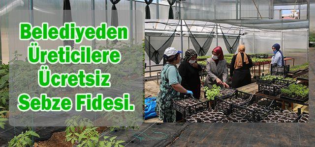 Ardeşen Belediyesi Üreticilere 4 Bin Adet Ücretsiz Sebze Fidesi Dağıtacak.