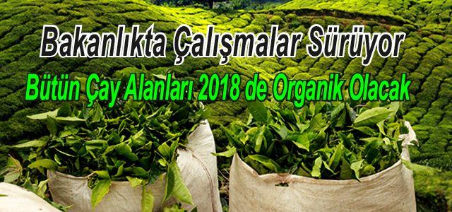 Bakan Çelik: Organik Çay Üretimine Geçiş 2018'de