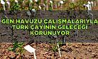 Gen havuzu çalışmalarıyla Türk çayının geleceği korunuyor
