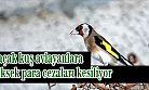 Saka kuşu için 9 bin 800 lira idari para cezası