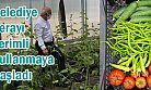 Serada Yetişen Sebzeler Belediyenin Tesislerde Tüketilmeye Başladı