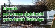 Ardeşen Belediyesi 300 Yeni Ağaç Dikiyor