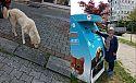 Ardeşen Belediye Ekipleri Sokak Hayvanlarına Yem Bırakıyor